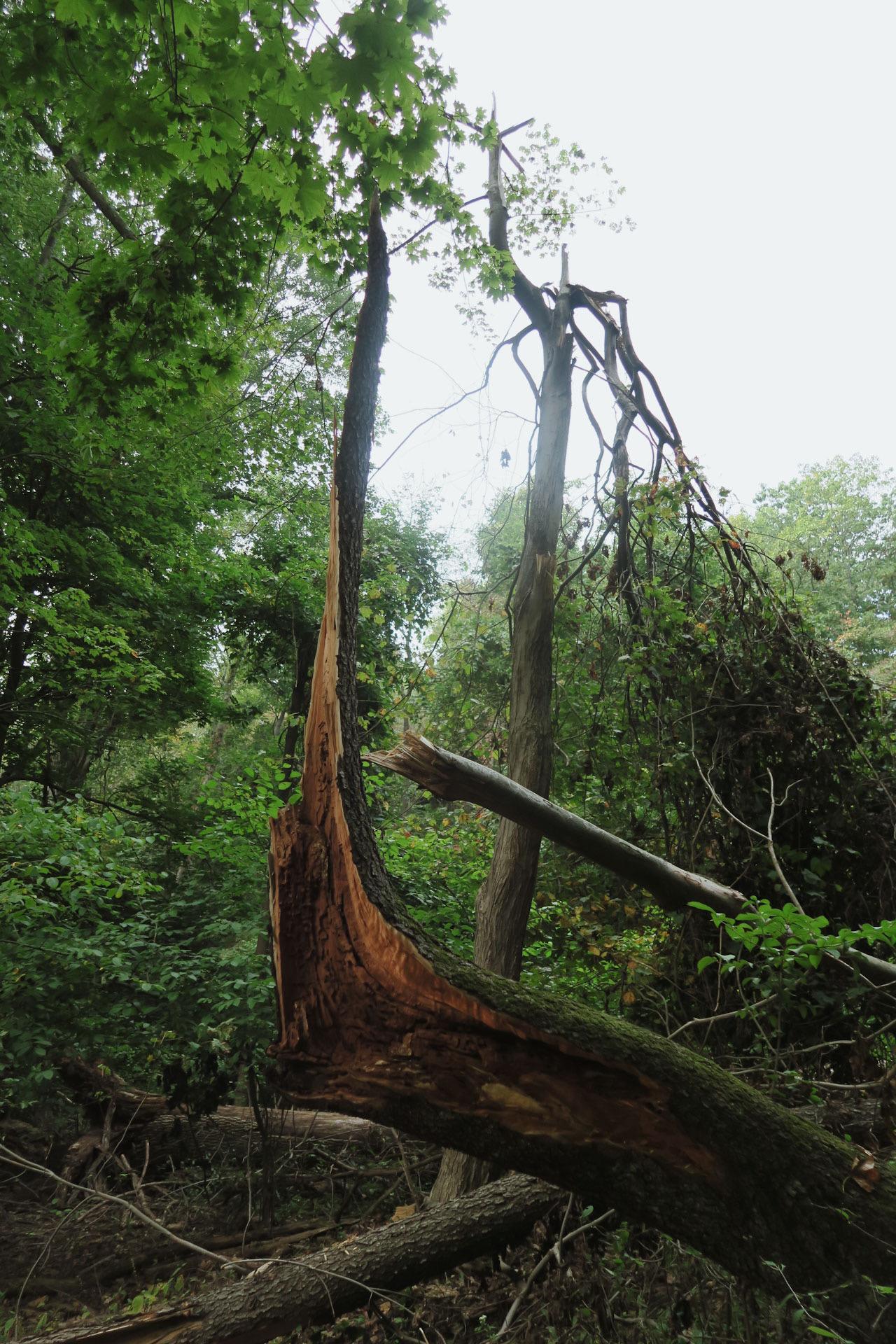 moody broken tree trunk